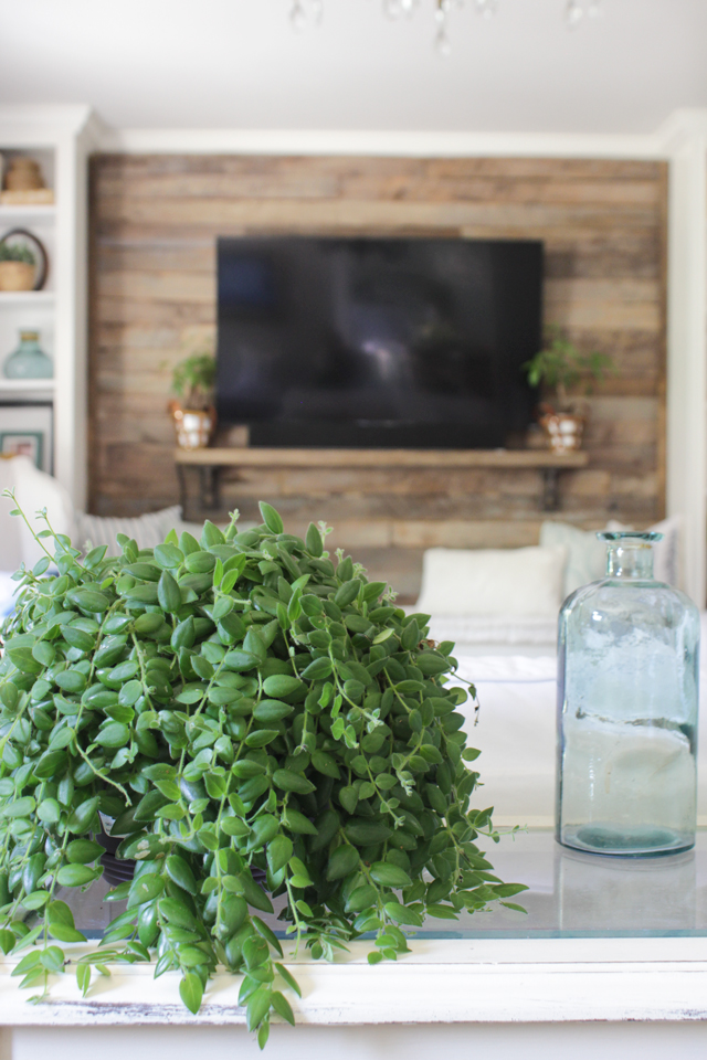 Indoor plant on sofa table