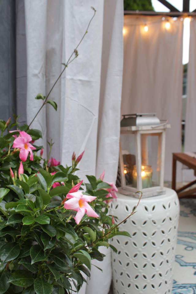Pink flowers and vines in patio pots